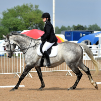 Dressage Open & Qualifiers